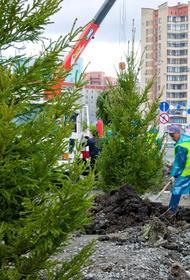 Как прижились крупномеры в Челябинске, проверят через год