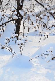 Синоптик Тишковец: в центральную Россию возвращаются 20-градусные морозы