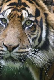 В Кишиневском зоопарке тигр напал на сотрудника