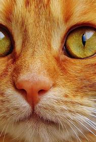 В Латвии коронавирусом заразился кот