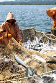 В Хабаровском крае предложили запретить промышленное рыболовство