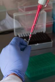 Эксперт Эмбарек перечислил четыре гипотезы передачи коронавируса к человеку в Ухане, летучих мышей исключили