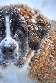 Названа причина появления «голубых собак» в  Дзержинске