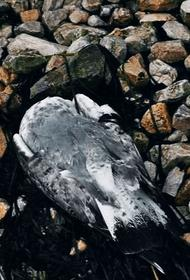 Причина гибели водоплавающих птиц в Керченском проливе остается невыясненной