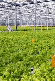На Южном Урале фермерам упростят процесс реализации продукции