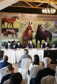 Состояние коневодческой отрасли Кубани обсудили на краевом совещании