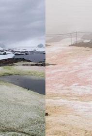 В Антарктиде около украинской станции появился цветной снег