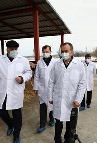 На Кубани в два раза увеличат субсидии фермерам на производство молока