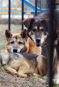 Родные едва не убитой собаками Татьяны Лоскутниковой требуют наказать виновных