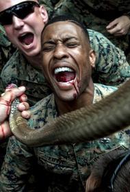 Военнослужащим США запретят пить кровь кобры во время учений на выживание в джунглях?