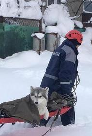 Кубанские спасатели вытащили собаку из снежного плена