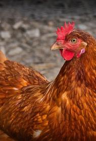Профессор Виктор Зуев прокомментировал выявление птичьего гриппа в России