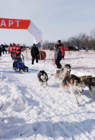 Под Хабаровском прошли гонки на собачьих упряжках