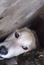 Кубанские спасатели вызволили застрявшую между бетонными плитами собаку