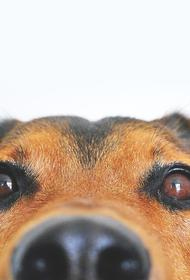 Ветеринары спасли собаку, попавшую в лечебницу с алкогольным отравлением в день кошек