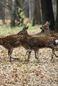 Браконьеры ради забавы убили 15 оленей в национальном парке «Лосиный остров»