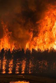 Почему человечество не может эффективно бороться с крупными природными пожарами
