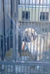 Хабаровские арестанты мастерят клетки для отлова собак