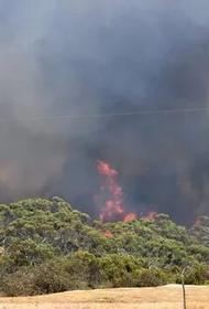 Спасти леса от пожаров можно выжиганием