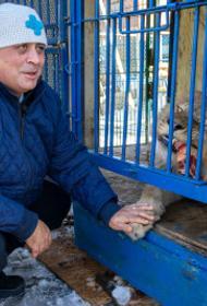 Челябинский ветеринар рассказал, почему львенок Симба до сих пор не в Африке