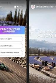 В парке Галицкого заменят искусственный шалфей на живые растения