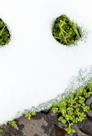 Климатолог Семенов заявил, что зима из России может исчезнуть