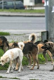 Что делать, если на вас напала бездомная собака