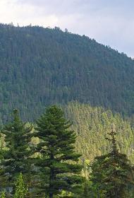 В Хабаровском крае к восстановлению леса приступят в мае