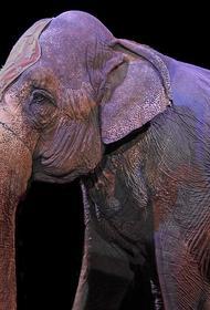 Дрессировщик Дементьев-Корнилов назвал причину драки слонов в Казани