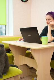Челябинские эксперты отобрали полезные для школьников интернет-ресурсы