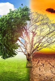 О климате, лесной растительности и пресной воде: есть ли способ исправить то, что разрушается?