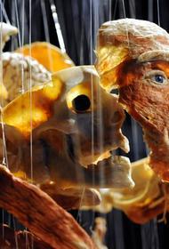 СКР организовал проверку выставки «Доктора Смерть», на которую пожаловались православные активисты