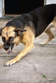 В Хабкрае семье ребенка, укушенного собакой, заплатят 150 тысяч рублей
