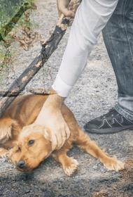 В России растет число уголовных дел за жесткое обращение с животными
