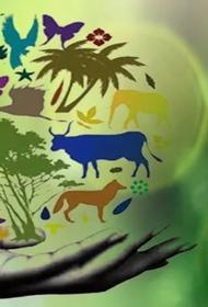 Как сохранить биологическое разнообразие планеты