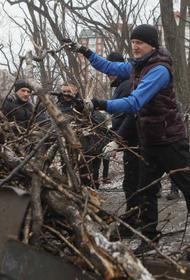 Власти Владивостока за четыре месяца после ледяного дождя не смогли вывезти с улиц бурелом