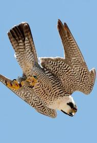 Сегодня отмечается Международный день птиц