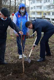 На Кубани в рамках акции «Сад памяти» высажено более 23 тысяч деревьев