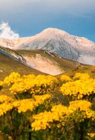 Кавказским государственным заповедником хотят пожертвовать ради горнолыжного курорта