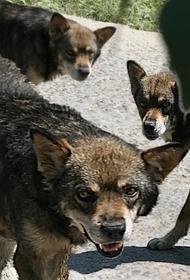 В Бурятии собаки растерзали пожилую женщину