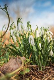 Синоптик Вильфанд сообщил о приходе «майской погоды» в Москву и другие регионы ЦФО