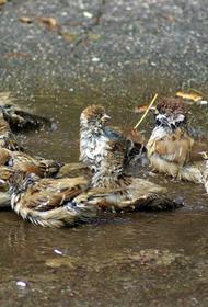 Противогололедные реагенты убивают экологию города, проголосуют ли в этот раз депутаты «ЗА»?