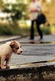 Бездомные животные в ожидании приюта