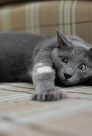 Роботы научились генерировать фотографии котиков