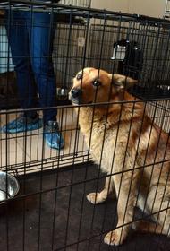 В Челябинской области заработал государственный приют для животных