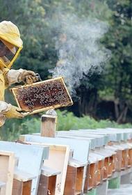 Хабаровские аграрии просят пчеловодов о помощи