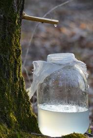 Диетолог Стародубова предупредила о последствиях чрезмерного потребления березового сока