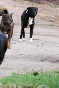 В Башкирии бродячие собаки напали на ребёнка. Малыш погиб от укусов
