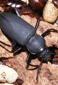 Вместо домашних питомцев жуки, пожирающие пластик?
