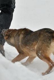 Люди vs собаки: как остановить череду трагедий